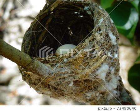 卵がのぞく鳥の巣のクローズアップ 73490640