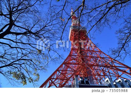 冬枯れの木々の間に聳える東京タワー 73505988