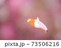 幼魚 73506216