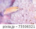 幼魚 73506321