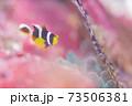 幼魚 73506381