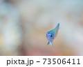 幼魚 73506411