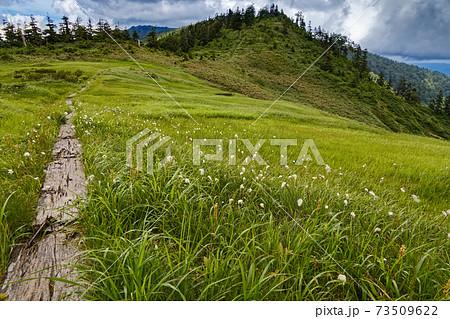 ワタスゲ咲く会津駒ヶ岳・大津岐峠への稜線 73509622