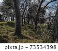 東京都内で丘の上(公園)に林がある光景のイラスト 73534398