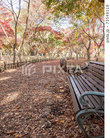 落ち葉の絨毯と紅葉の美しい景色 ベンチと園路 73549119