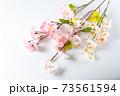 桜の木の枝 73561594