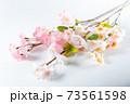 桜の木の枝 73561598