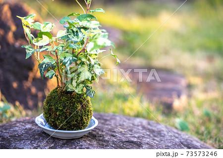 苔盆栽 和風イメージ 73573246