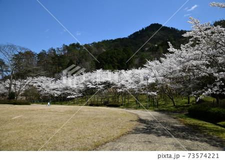 青空バックの桜並木 コピースペース付き 73574221