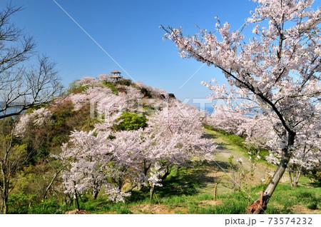 桜の花が咲く高津子山(章魚頭姿山) 73574232