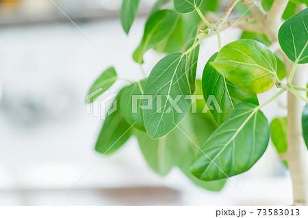 観葉植物 73583013