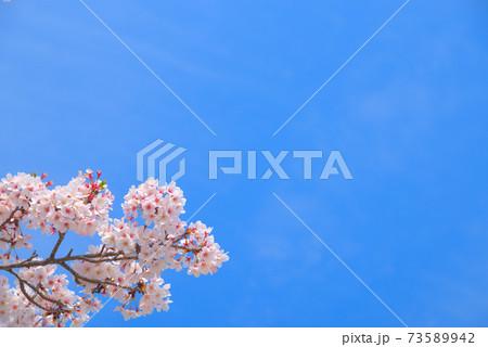 ソメイヨシノ咲く春の空 岡山県岡山市東区 73589942