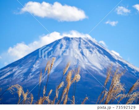 冬(12月)、本栖湖の湖畔から見た富士山とススキ(ピントはススキ) 山梨県身延町 73592529