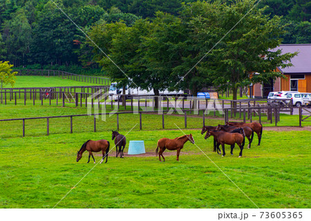 曇りの日牧場でのんびり過ごす馬たち 73605365