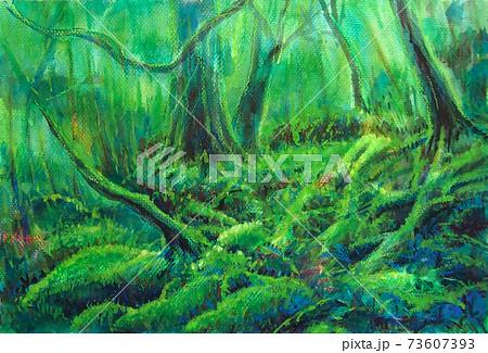 屋久島の森 73607393