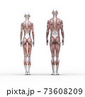 筋肉見本 男女 表面 perming3DCGイラスト素材 73608209