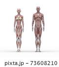 筋肉見本 男女 表面 perming3DCGイラスト素材 73608210