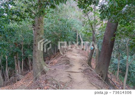 七沢浅間神社から鐘ヶ嶽への登山道 73614306