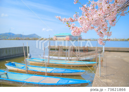 水辺に咲くソメイヨシノの花と係留された小舟 岡山県岡山市東区 73621866