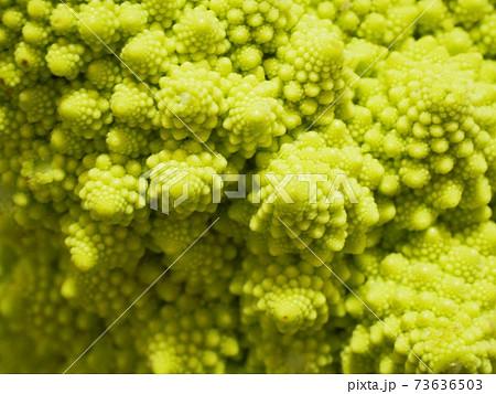 フラクタル構造を持つ野菜、ロマネスコの表面 73636503