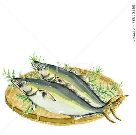 水彩:ザルにのせた鰤2尾 ぶり 魚介 素材 コピースペースあり白バック 透過 73655269