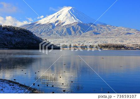 富士山背景の河口湖畔に舞い降りる鴨 73659107
