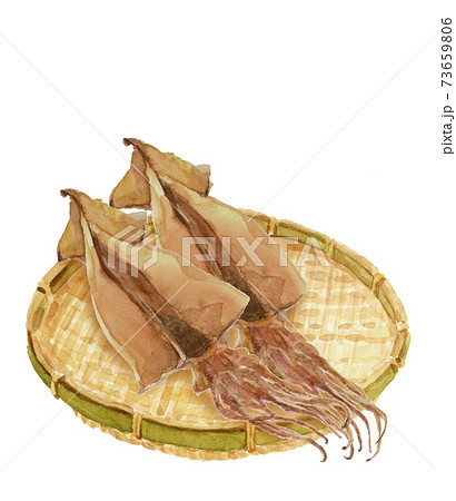 水彩:ザルにのせたスルメイカ2枚 干物 乾物 イカ 素材 白バック コピースペースあり 透過 73659806