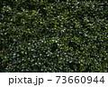 家の垣根植物のイラスト 73660944
