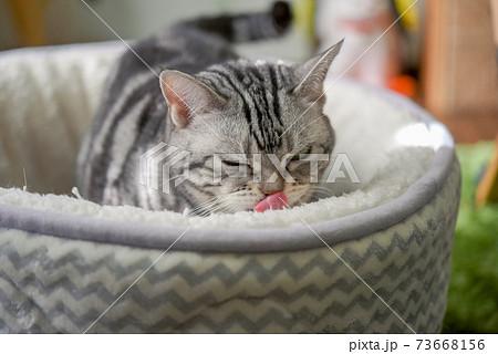 昼寝の準備をする猫 73668156
