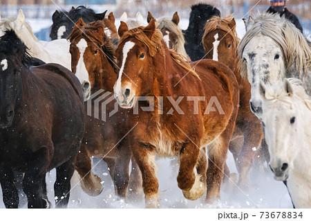 馬追い 73678834