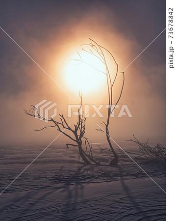 気嵐と枯れ木 73678842