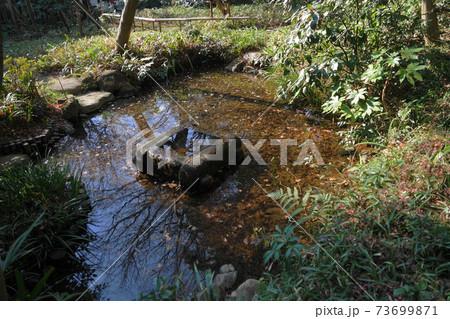1月 小金井60ハケの湧水・美術の森緑地 73699871