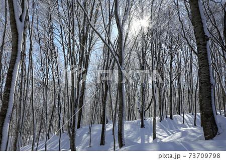 厳冬のブナの森に光射す-癒しの森 福島県只見町 73709798