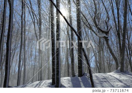 青空に映える厳冬のブナの森に雪が舞う、風の悪戯-癒しの森 福島県只見町 73711674