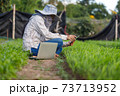 Thai farmer using a smartphone in the morning glory vegetable farm, for the organic and smart farming concept, select focus shallow depth of field 73713952