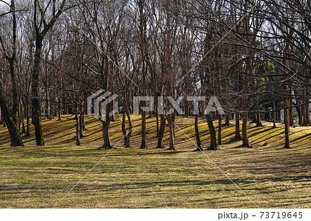 1月 小金井91冬枯れの丘・(武蔵野公園) 73719645