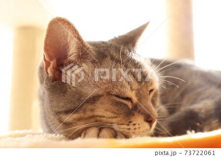 陽だまりの光の中で熟睡する猫アメリカンショートヘアブルータビー 73722061