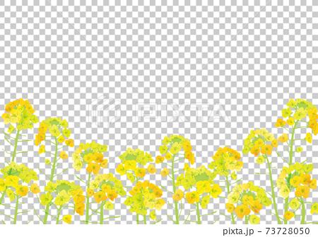 水彩風格油菜花插畫素材 73728050