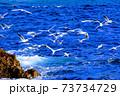 海面近くを飛ぶかもめの群れ 73734729
