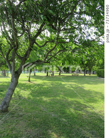 木に囲まれた芝生広場(北柏ふるさと公園) 73734960
