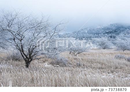 霧ヶ峰ビーナスラインから眺める霧氷 八島湿原方面 73738870