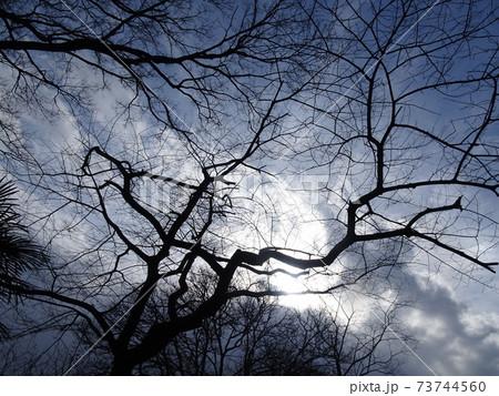 冬枯れの樹と冬空と雲の隙間から輝く太陽を見上げた風景 73744560