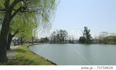 ウォーキングする人がいるしのぶ池の風景/行田水城公園(埼玉県行田市) 73756626