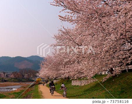 五山送り火「舟形」火床と賀茂川の満開の桜と多くの人たち 73758116