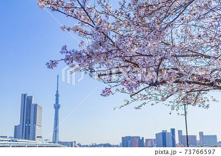 東京スカイツリーと桜(南千住汐入公園) 73766597