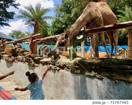 東南アジアの動物園でキリンに餌をやる勇敢な女の子 73767485