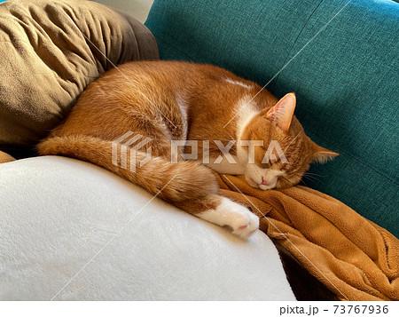 青いソファーで眠るスコティッシュフォールドの子ねこ 73767936