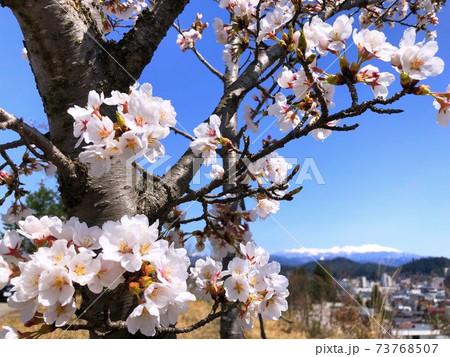 桜の後ろに青空と冠雪を撮った写真 73768507