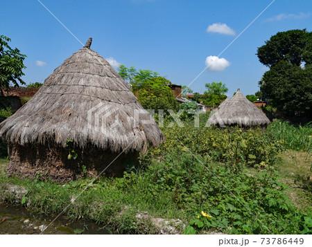 北インドの片田舎クルキハール村の農家で見た稲穂の穂積 73786449