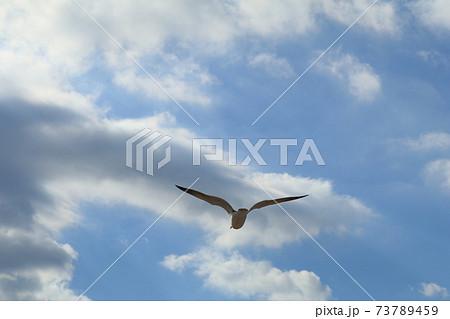 青い大空に気持ちよさそうに飛び立っていくカモメ 73789459